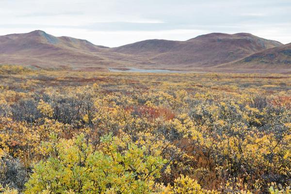 Jordens klimazoner og plantebælter - undervisningsmateriale geografi