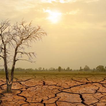 Tørken og krigen