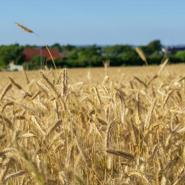Konventionelt landbrug