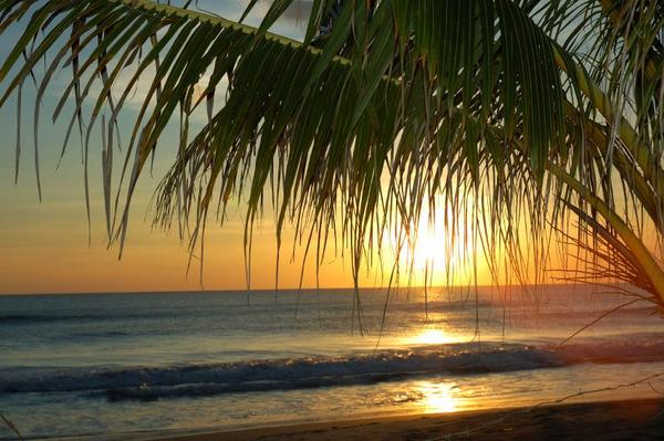 2006 Ammon Cogdill   Istock   palm sunset