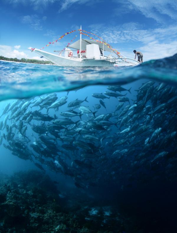 Fisk DudarevMikhail Shutterstock
