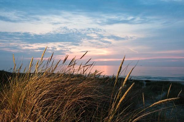 Tilartiklen ThomasSkjaeveland Shutterstock