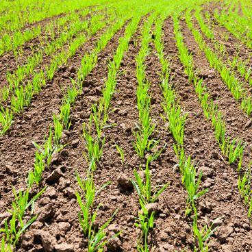 Naturen og landbruget