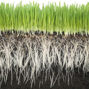 Jordbundens næringsstoffer