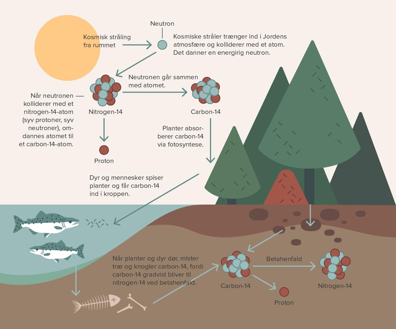 Carbon dating radioaktivt henfald